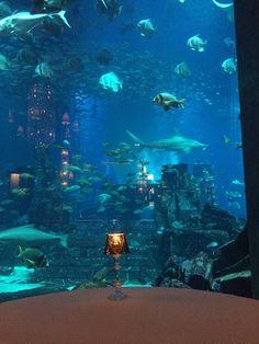 Ossiano, Dubaï - Restaurant Avis, Numéro de Téléphone & Photos - TripAdvisor Dubai Aquarium, Restaurants, Insta Story, Trip Advisor, Photos, Pictures, Restaurant
