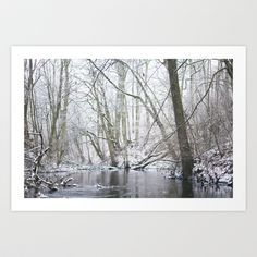 Winter forest... with a little red-hair cat:) Art Print by Bartosz Ostrowski - $16.00
