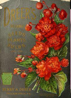 Begonias, tuberous. Dreer's Garden Book. (1904)