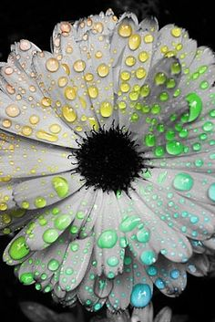 phone wallpaper......pulps makes petals wettie& fresh,,,, ,thanks.