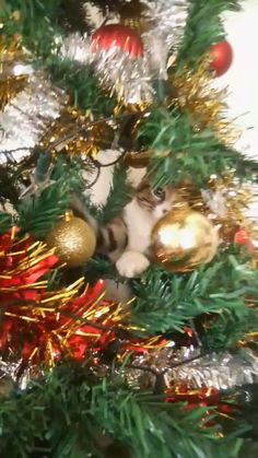 My naughty bum up to his old tricks again! 🤣🎀🎄🎅🎶 😻❤️ #christmascat #christmascats #christmastree #catlovers #tabbycat #funnycats #funnycatvideos #catchristmas #catlover #christmascheer #christmas #caturday #christmasvibes #catsofinstagram #christmascatsofinstagram #christmascatvideos #catsinthechristmastree Handmade Bridal Jewellery, Wedding Jewelry, Champagne Gown, Types Of Earrings, Cat Tree, Funny Animal Videos, Christmas Cats, On Your Wedding Day, Personalized Jewelry