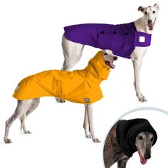 Warm Climate Special includes Greyhound Dog Rain Coat and Tummy Warmer Dog Vest with Hood for Greyhounds