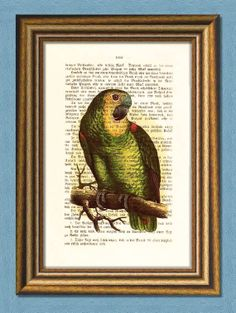 Items similar to GREEN PARROT - Dictionary art -Vintage art book page print recycled- Antique Book Page upcycled - Art Print Dictionary on Etsy Dictionary Art, Poster Prints, Art Prints, Buy 1, Vintage Art, Parrot, Black Friday, Great Gifts, Birds