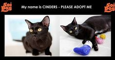 My name is CYNDERS - PLEASE ADOPT ME! Email cristy@soidog.org for all adoption enquiries. Hello, my name is Cynders and I have been at Soi Dog in Phuket nearly all my life. I am just over one year now. http://www.soidog.org/en/adoptions/cyndaquil/