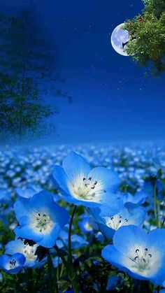 Wallpaper Nature Flowers, Beautiful Landscape Wallpaper, Scenery Wallpaper, Beautiful Landscapes, Wallpaper Backgrounds, Beautiful Flowers Images, Beautiful Photos Of Nature, Amazing Nature, Cool Pictures Of Nature