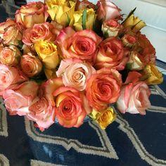 Fresh roses  Parker Kennedy Living