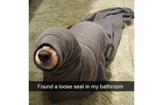 33 Hilarious Snapchats That Prove We Really Don't Deserve Dogs (Slide #8) - Pawsome