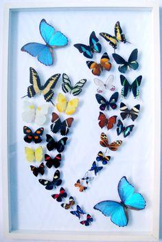 Butterfly Art #butterflies-peace