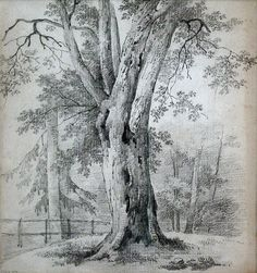 Camille corot art tree drawings pencil, pencil drawings et drawings. Easy Pencil Drawings, Pencil Drawings Of Animals, Pencil Drawing Tutorials, Realistic Drawings, Ink Drawings, Tree Sketches, Drawing Sketches, Sketching, Life Drawing