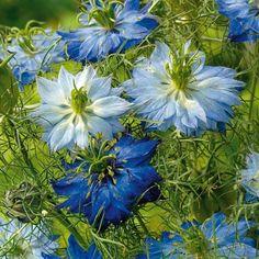 200 Samen Gemischt Zinnia Mehrjährigen Blumen Samen Annual Samen Steuern Garten