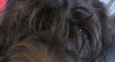 A Dog s eyes, never lie.