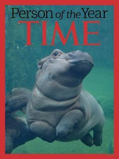 OMG You Guys, It's Fiona The Hippo's First Birthday