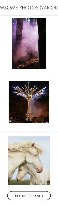 """""""AWSOME PHOTOS (VARIOUS)"""" by dawn-lindenberg ❤ liked on Polyvore featuring fireworks, backgrounds, animals, pictures, horses, photos, pics, photo, filler and image"""