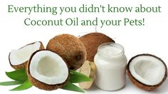 If you thought Coconut Oil was only good for Humans - Check out this article on all the Benefits it has for your Pets #CoconutOil #Pets