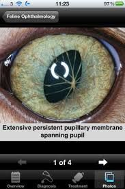 feline ophthalmology - Szukaj w Google