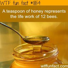 A teaspoon of honey - WTF fun facts