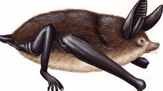 Na Nova Zelândia, cientistas descobrem um novo fóssil de morcego que andava em quatro membros, há cerca de 16 milhões de anos.