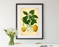 Lemon Vintage Wall Art/Lemon Wall Printing/Citrus Antique Wall Poster/Citrus Lemon Print/Wall Decor/Entryway Poster/Vintage Wall Art Poster Vintage, Vintage Wall Art, Vintage Walls, Poster On, Poster Wall, Entryway Wall Decor, Lemon Print, Botanical Art, As You Like