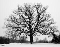 Snowy Tree 2009