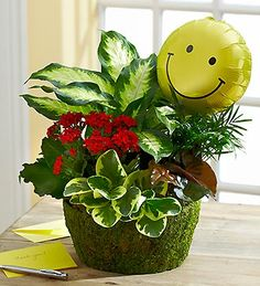 Our dazzling dish garden features a bright blooming kalanchoe, and is ideal for sending smiles that last