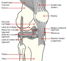 Knee diagram.svg