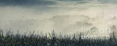 Corn and Fog - giant panorama print
