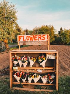 My Flower, Wild Flowers, Beautiful Flowers, Spring Aesthetic, Flower Aesthetic, Bouquet, Wall Collage, Planting Flowers, Flower Arrangements