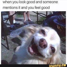 Funny Spanish Memes, Stupid Funny Memes, Funny Animal Memes, Funny Relatable Memes, Haha Funny, Funny Animal Pictures, Funny Animals, Wholesome Memes, Real Friends
