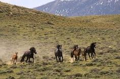 In between Rock Springs and Green River Wy. Sometimes you can see the horses as you are driving on the freeway