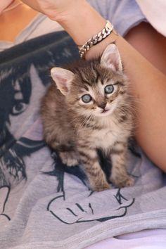 Mon petit chaton MAYKA