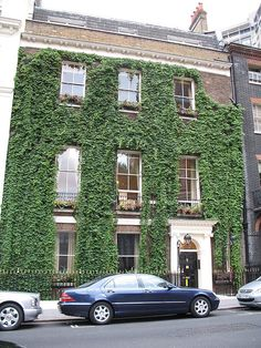 Ivy and period Georgian Houses, match made in heaven.