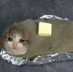 sad cat baked potato in foil Sad Cat Meme, Cat Memes, Dankest Memes, Funny Memes, Meme Meme, Funny Fails, Jokes, Funny Animal Memes, Cute Funny Animals