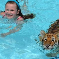 $200 per Half Hour - Swim/ Play with Tiger Cubs : Dade City's Wild Things, near Tampa, Florida