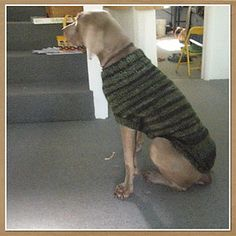 The Ozzie large dog sweater (link to Ravelry pattern) | I don't want Patty crying because it's so cold again this winter.