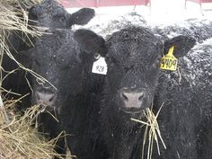 Year of the Farmer | Debbie Lyons-Blythe: Farmers, It's Time to Join the Conversation | RamZone
