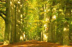 Herfst in het bos!