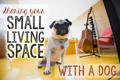 The continuous housing slump has made renting a popular choice for many American families these days. Although modern apartment complexes offer amazing amenities for pet parents, like dog parks and walking...