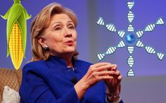Hillary Clinton Cheerleads for Biotech and GMOs  Like much other major political candidates -bought out by biotech... check it out!