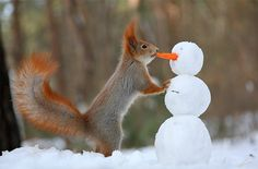 Russian nature photographer Vadim Trunov has captured impressive photos of two adorable squirrels having some wintertime fun, and interacting with their surroundings ...