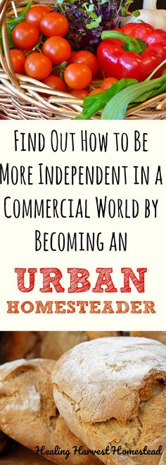 What on earth is Urban Homesteading? Is it even a thing? Find out what urban homesteading is, how to become an urban homesteader, and how to live a more self-reliant life no matter where you live. Home Grown Vegetables, Homestead Survival, Survival Skills, Survival Prepping, Survival Bow, Survival Hacks, Urban Survival, Outdoor Survival, Emergency Preparedness