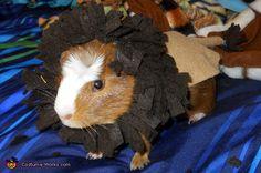 Lion - 2012 Halloween Costume Contest