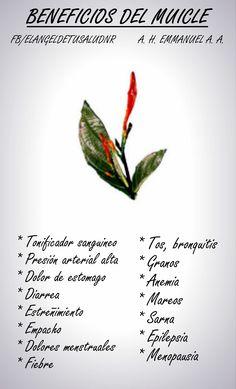 #BENEFICIOS #MUICLE #MEDICINAALTERNATIVA #SALUD