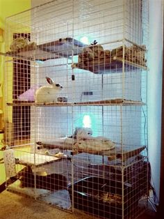 I think it would be a great idea to get a thread going with pics of everyones bunny condos/living area/room where there bunny lives. I think this would be great to do for people who need new ideas for there bunny condo or just for p. Bunny Cages, Rabbit Cages, House Rabbit, Rabbit Toys, Bunny Rabbit, Indoor Rabbit Cage, Rabbit Information, Rabbit Habitat, Bunny Room