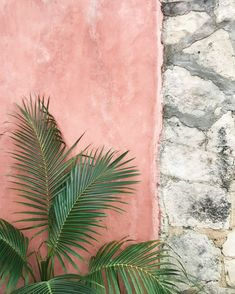 streets of tulum 🌿 . 〰️ image by Jungle Tree, Instagram Accounts To Follow, Aesthetic Instagram Accounts, Photo Journal, Pink Walls, Beach Look, Photo Instagram, Travel Photographer, Wall Collage
