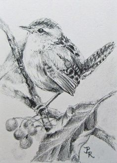 Imgs For > Simple Pencil Drawings Of Birds Realistic Pencil Drawings, Bird Drawings, Pencil Art Drawings, Animal Drawings, Charcoal Drawings, Moon Drawing, Painting & Drawing, Animal Sketches, Art Sketches