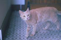 Gattino Titti