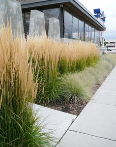 feather reedgrass used in a border