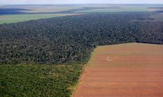 Amazon Deforestation Threatens South America's Water Security | EcoWatch