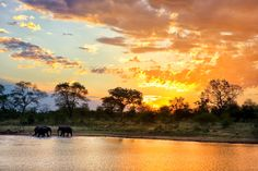 Africa | Wildlife | Safari.  A perfect African sunset landscape captured in Kruger.