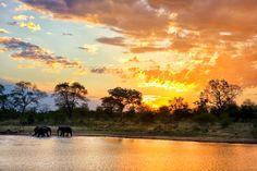 Africa   Wildlife   Safari.  A perfect African sunset landscape captured in Kruger.